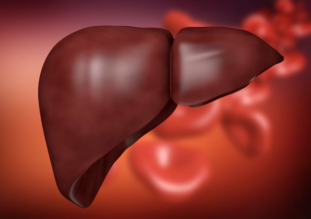 liver-organic-background_59529-14